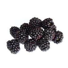 fruitsoort Braambes