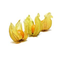 fruitsoort Physalis