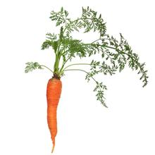 fruitsoort Mini worteltjes