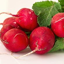 fruitsoort Radijs