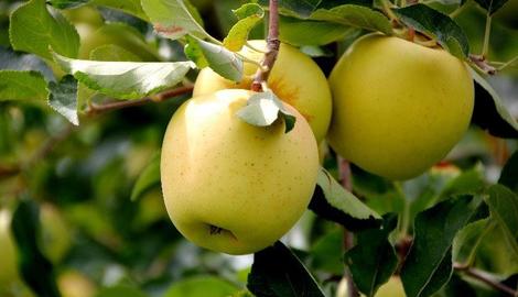 Le top 10 des fruits sains