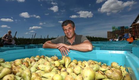"""Fruitteler geeft 50.000 kilo peren gratis weg: """"Liever dit dan ze naar de kop van politici gooien"""""""