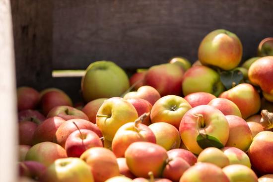 Hoe ontwikkelen we een nieuw appelras?