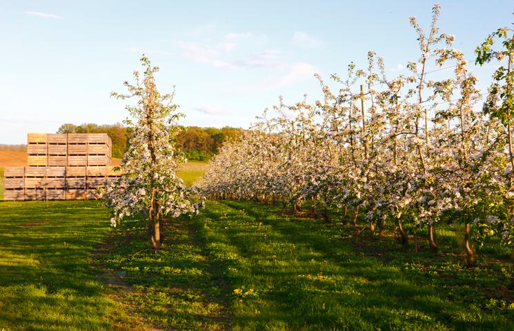 Maken gewasbeschermingsmiddelen je fruit ongezond?