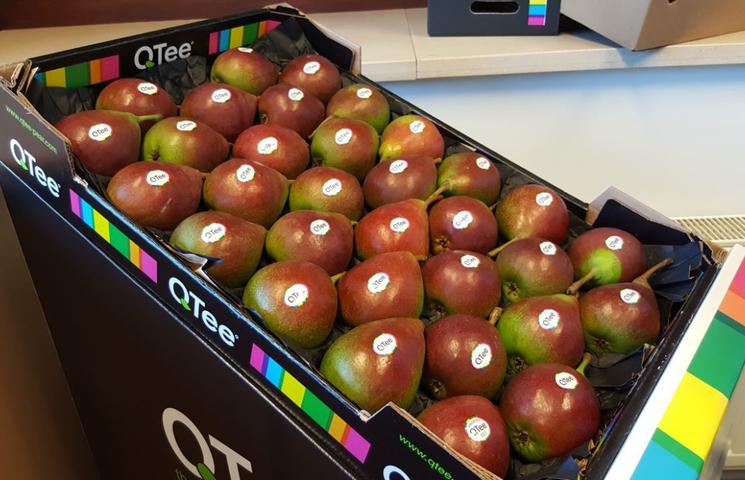 Qtee: nieuwe perenvariëteit als antwoord op Ruslandcrisis